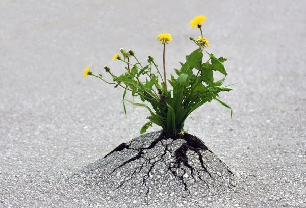 Không bao giờ từ bỏ!